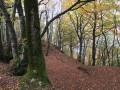 La forêt de Challuz