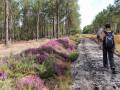 La forêt de Courléon