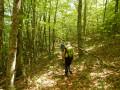 La forêt de Fayard