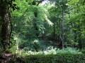 La forêt dense et spectaculaire