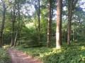 La forêt domaniale dans la Petite Vallée