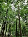 La forêt domaniale de Mormal, comme une cathédrale sylvestre