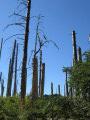 Forêt ravagée