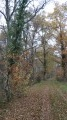 La forêt traversée par le GR3C