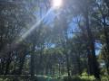 """La """"futaie claire de chênes"""" sous le soleil de midi"""