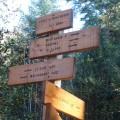 Forêt de Montbasin 956 m