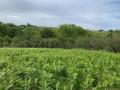 La lande d'Halsou