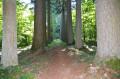 L'Arboretum de Vendresse, la Ligne aux Sapins et les sources du Cogneux