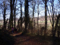 La lisière du bois Saint-Martin