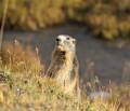 Col de la Lose, au royaume des bouquetins, chamois et marmottes