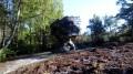 Le sentier botanique de la Pierre au Coq
