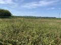 La plaine d'Ansot