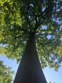Les Sept Chênes en Forêt de Tronçais