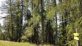 La redéscente dans la forêt