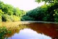 La réserve piscicole de l'étang de Moutiers