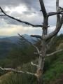 La Rhune à travers un arbre fantomatique