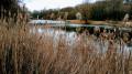 La Fontaine des Gobelins, la forêt autour des étangs et sa faune
