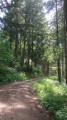 La route forestière de Tire-Cul
