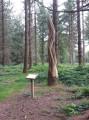 À la découverte d'arbres remarquables en Forêt de Crécy
