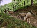 La traversée de la zone pastorale