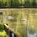 La Venise Verte : Damvix - Saint-Hilaire-la-Palud - Arçais