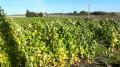 La vigne en allant vers la Chaumine