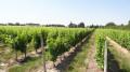 La vigne autour de Mont-Près-Chambord
