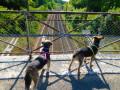 La voie ferrée