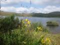 Lac Montcineyre au petit matin