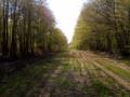 Large chemin herbeux sur le plateau
