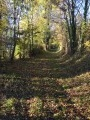 Large chemin herbeux