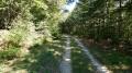 Large voie carrossable en forêt