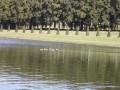 Le bassin du Grand Miroir et ses rares canards .