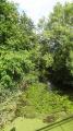 Le Beuvron couvert de nénuphars