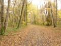 Le bois aux Pichons