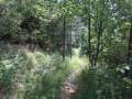 Le bois clair en descendant après le tunnel