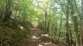 Le Bois de Charui