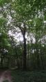 Le bois de Monteaux