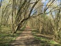 Le bois en sortie d'Hénonville