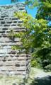 Le château du Bilstein