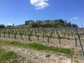 Circuit des vignes à Bouteville