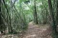 Le chemin à travers les Bois de Melle