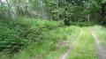 Le chemin bordé de fougères
