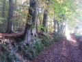 Le chemin creux qui descend vers la forêt