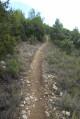 Le chemin dans la forêt