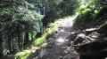Le chemin de départ dans le bois