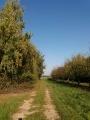 Le chemin de randonnée en bordure des vergers