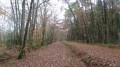 Le chemin de randonnée peu après avoir quitté le canal de la Sauldre