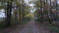 Le chemin de randonnée  peu avant l'étang de l'Auneau