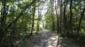 Le chemin de randonnée sous le couvert d'un bois